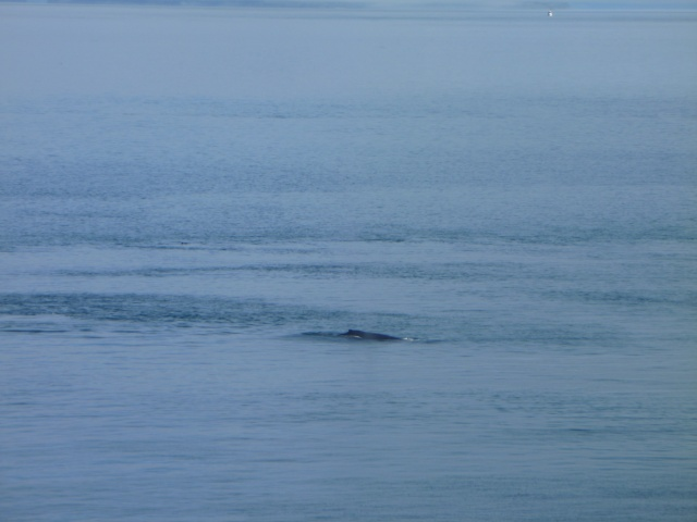 Then you'd see the dorsal fins come out of the water.